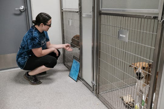Kate Turner, office manager, checks on one of her favorite dogs, Bruce, at the new Ingham County Animal Control & Shelter in Mason Sunday, June 2, 2019. The shelter move should be completed by June 4th with full shelter service available on the 5th.