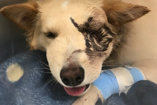 Owner of dog bitten by rattlesnake hoping for help
