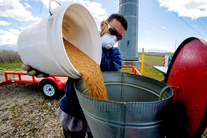 Quinten Salt, rural field supervisor for the Salt Lake City Mosquito Abatement District, fills the hopper on his four-wheeler with pesticide before checking larvae levels in the wetlands north of the Salt Lake City International Airport on Monday, May 20, 2019. (Scott G Winterton/The Deseret News via AP)