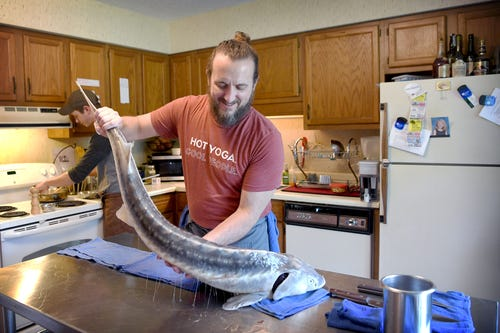 Gavin Baker lifts up a whole Marshallberg Farm sturgeon in his apartment home test kitchen as he prepares to butcher the fish on April 18, 2019.