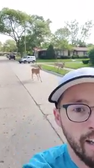 Jared Wein, of Royal Oak, was joined by three deer for about half a mile as he ran through Oak Park on Sunday, June 2, 2019.