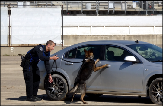 Evansville, Indiana police Officer Eric Herrmann and his K-9 partner Kismet conduct a search for narcotics Monday during the U.S. Police Canine Association field trials at Mansfield Motor Speedway.