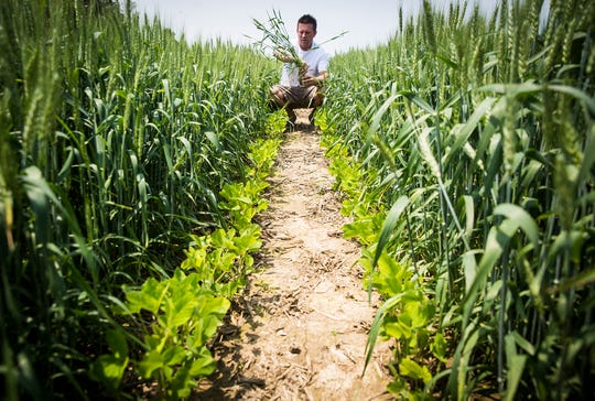 Jason Mauck walks a mixed-crop field on his farm in Gaston Tuesday afternoon.