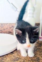 Sammy the kitten.
