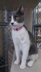 Luciana is available for adoption at 10807 N. 96th Ave. in Peoria. For more information, call 623-773-2246.