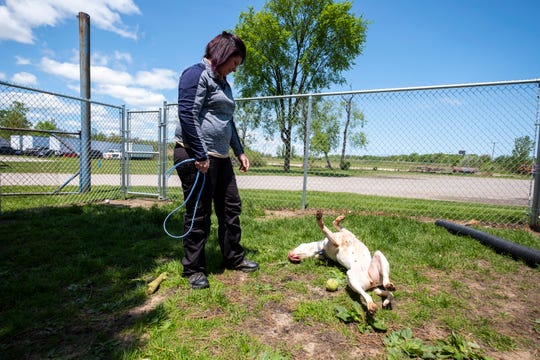 St. Clair County Animal Control Director Erika Strowman watches Patty, a 2-year-old American bulldog mix, roll in the grass Monday, June 3, 2019, at St. Clair County Animal Control.
