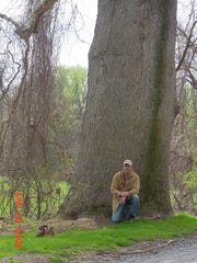 Scott Wade studying a sycamore tree at Valley Forge.