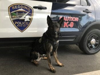 Redding police said K-9 Otto helped apprehend a wanted felon Sunday afternoon.