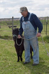 Ken Diehls leads one of the miniature horses on the farm. The unique breed is friendly and lovable, although a little more affordable than a traditional sized-horse in Janesville, Wis.