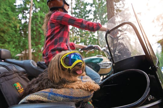 Some dogs can benefit from protective eyewear.