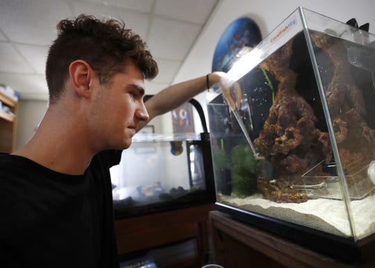 George Mavrakis, a senior at Lawrence University, feeds his seahorses, Pegasus and Poseidon, while filming a room tour video for his YouTube channel.