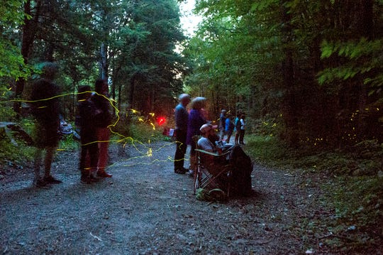 Visitors watch the synchronous fireflies at the Elkmont Campground in the Great Smoky Mountains National Park on June 3, 2019. Between 980 and 1100 come to the campground to watch the phenomenon each night of the 8-day mating period.