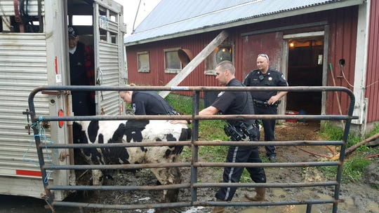 The Otsego County Sheriff's Office investigated an animal cruelty case involving 20 dead cows in a Town of Maryland barn.