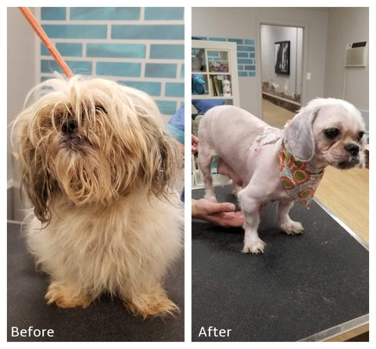 Many of the dogs rescued from a Pike County home were smelly, matted and infested with fleas but otherwise healthy. Some, like the one pictured, had to be completely shaved to correct the problem.