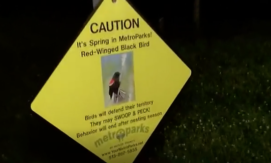 A sign at Voice of America Park in West Chester Township warns visitors that red-winged blackbird will aggressively defend their territory during mating season.