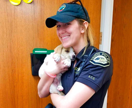 Animal Control Officer Elena Farnsworth holds a puppy that was rescued after she and her owner were trapped in a moving garbage truck in Provo, Utah, Tuesday, June 4, 2019. Provo Police Sgt. Nisha King said Tuesday officers rescued the puppy and her 43-year-old owner earlier that morning. They were sleeping in the dumpster when the truck collected and compacted the bin's contents with them still inside. The driver stopped the machine after hearing the man call for help. He sustained minor injuries.