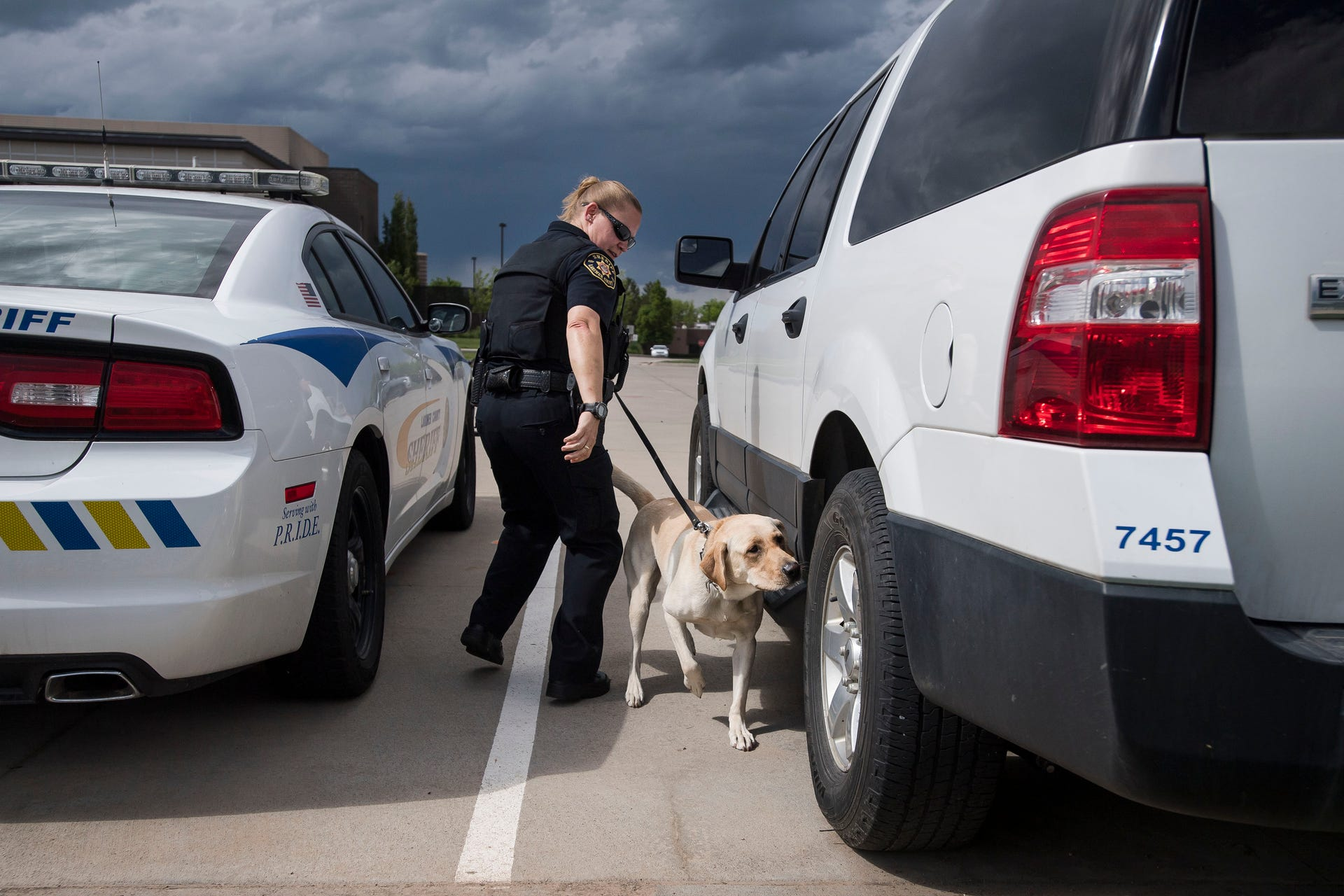 Meet dogs Maizey and Raven of the Larimer County Sheriff's