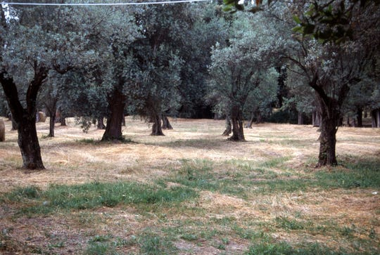 This ancient Italian olive grove is part of a villa well outside Rome because they had allergies too.