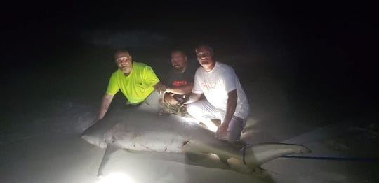 Members of the No Bones Fishing Club pose with a bull shark that they believe weighed around 550 pounds after catching the animal Sunday night at Navarre Beach.
