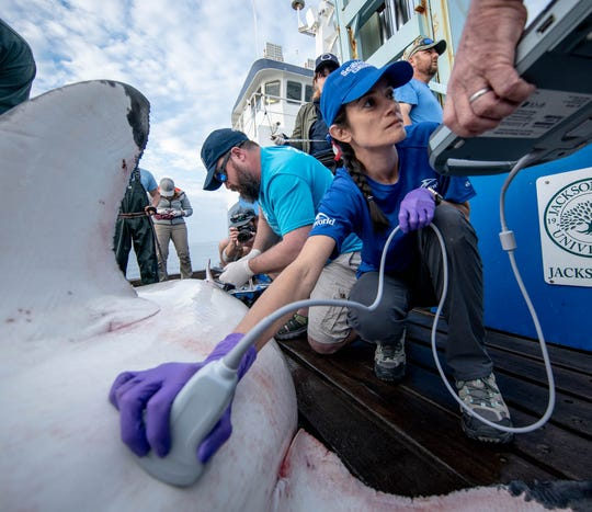 Giselle Montano, a reproductive specialist with SeaWorld, has been part of the OCEARCH expedition research team.
