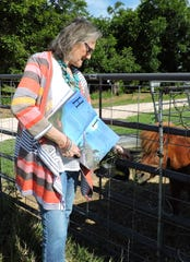 "Holding her just-published children's book open to ""H is for Horse,"" Glenna Decker offers some blades of fresh grass to the miniature horse that lives near her in Goree. Decker's book is ""West Texas:  A to Z."""