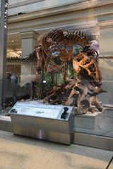 6/4/19 9:50:01 AM -- Washington, DC, U.S.A  -- An authentic Tyrannosaurus Rex skeleton inside Smithsonian's National Museum of Natural History newly reopened Fossil Hall.  The Smithsonian's National Museum of Natural History opened its dinosaur and fossil hall to the media on Tuesday, June 4, 2019 for a preview in Washington. The exhibit will open to the public on Saturday, June 8, 2019. The 31,000-square-foot exhibition will feature an authentic Tyrannosaurus Rex skeleton alongside more than 700 other fossil specimens, including mammals, reptiles, plants and insects, some never before displayed at the museum.   --    Photo by  Matthew Sobocinski, USA TODAY Staff