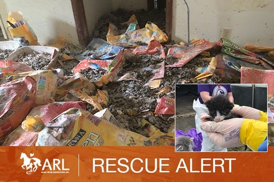 An image of an undisclosed central Iowa home where hundreds of dead and alive cats were stored along with garbage and cat feces, according to the Animal Rescue League of Iowa.