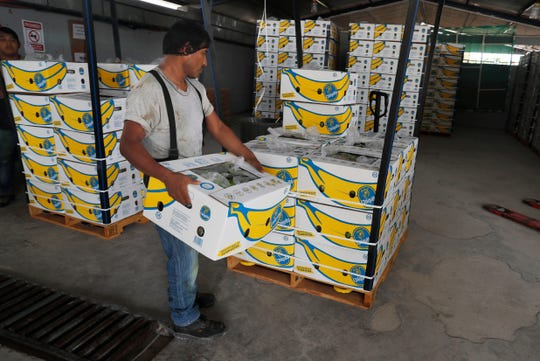 A worker stacks a box of freshly harvested Chiquita bananas to be exported, at a farm in Ciudad Hidalgo, Mexico, Friday, May 31 2019.