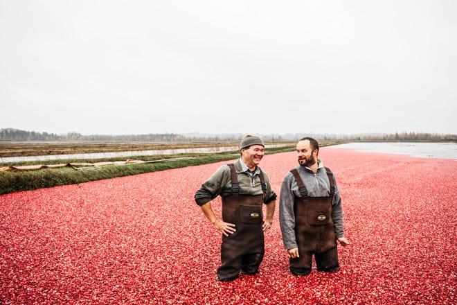 A cranberry bog.