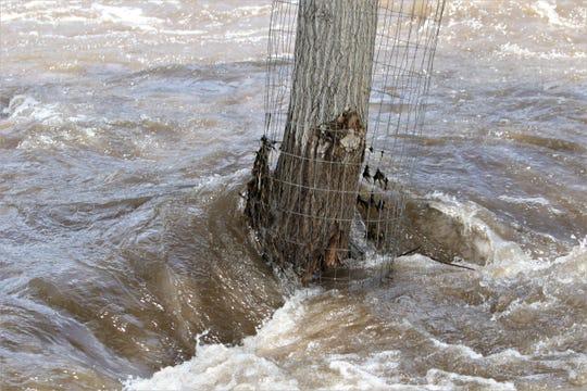 The Animas River flows around a tree, Wednesday, June 5, 2019, in Farmington.