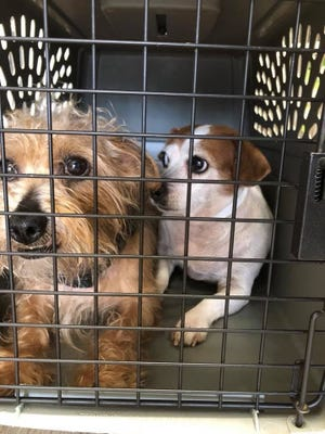 """Many rescue groups work with foster families who can take care of animals until they find a """"forever home."""""""