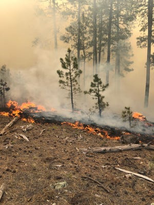The Coldwater fire burns through the Coconino National Forest.