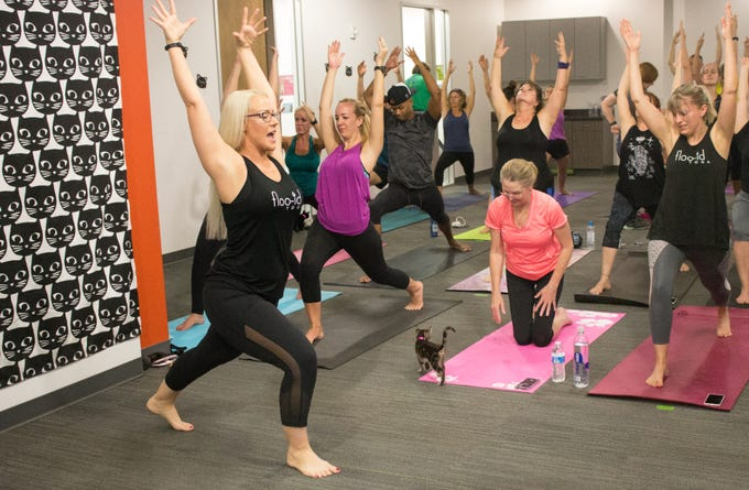 Guests enjoy yoga with adoptable kittens running by their sides in 2018.
