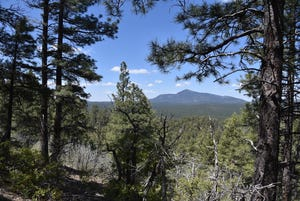 Kaibab National Forest woodlands