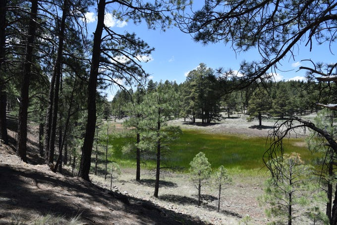 Wetlands on the Ponderosa Trail, which leads to the Davenport Hill Trail.