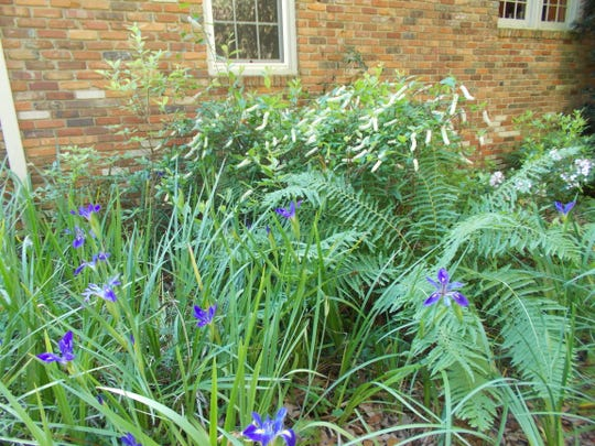 A rain garden can slow the flow of water.