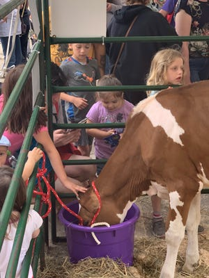 Dairy animals from farms in Dane County were the center of attention during Cows on the Concourse, held June 1 on Capitol Square in downtown Madison.
