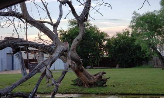 A tree was blown over near Ballinger and South 14 streets during a thunderstorm Wednesday.