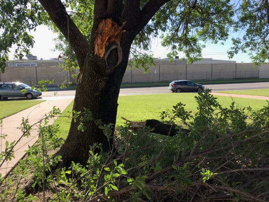 A large branch lies on the ground in front of the Cooper High School gym Thursday, the morning after thunderstorms twice rumbled through Abilene.