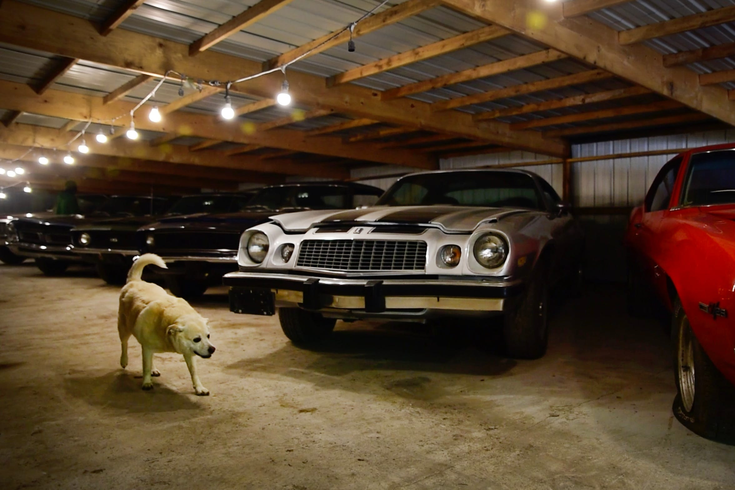 Coyote Johnson's dog, Daisy, patrols one of the five sheds on his Red Oak property where he houses his collection of muscle cars, which has grown to almost 90. Johnson bought his first car from his grandfather at age 16 and, after an auction in September 2019, will keep about 12.