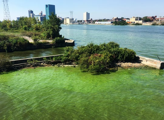 Green algae blooms on the Maumee River in downtown Toledo on Sept. 23, 2017. The Toledo-Lucas County Health Department issued a recreational public health advisory. NOAA's early HAB projections for 2019 predict a harmful algal bloom with a severity of greater than 7 (much worse than 2018).