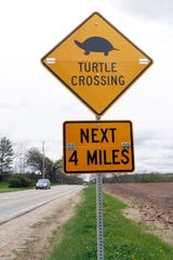 A sign warns drivers of possibility of turtles crossing the road.