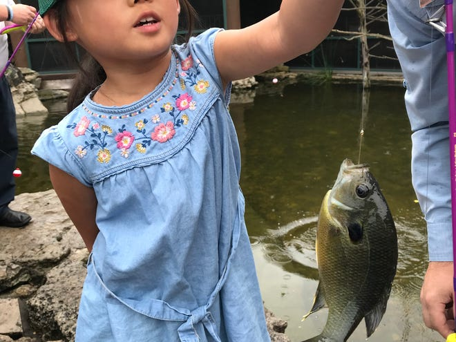 Danna Yang, 7, shows off the bluegill she hooked - and released - at Bass Pro Shops. It was the first fish she had ever caught.