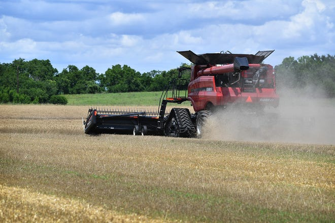 A few hot days have allowed harvesters to get into the region's wheat fields, paving the way for a bumper harvest that should sell at good prices.