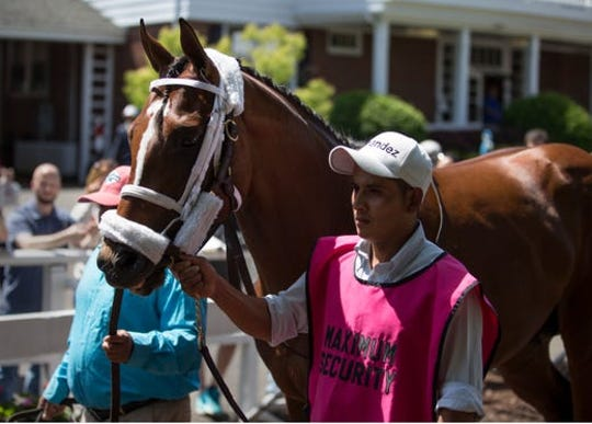 Maximum Security, shown schooling in the paddock at Monmouth Park on May 18, is expected to head the field for the Grade I $1 million TVG.com Haskell Invitational, to be run at Monmouth, on July 29