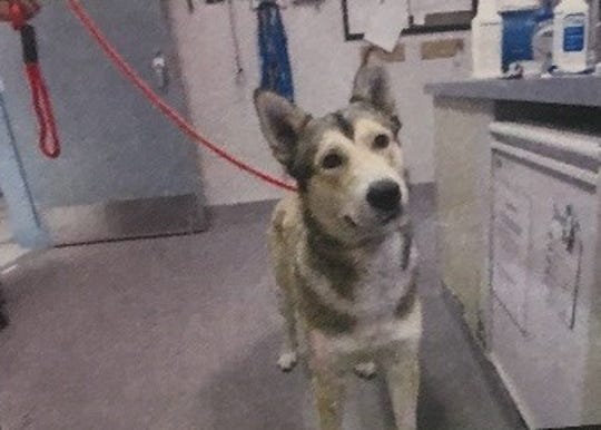 Pooch pilfered from Monterey County Animal Shelter early Thursday