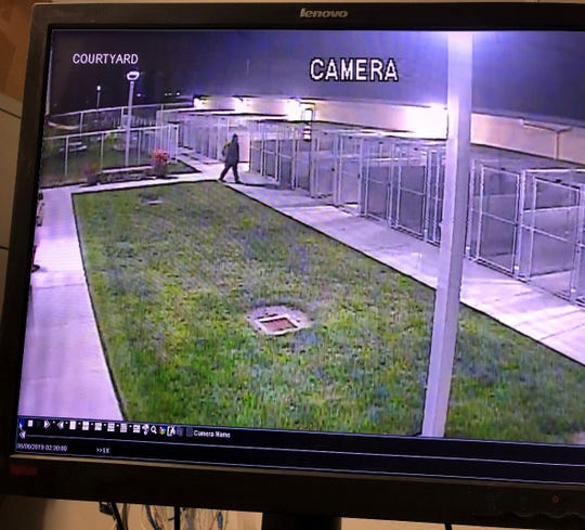 Early Thursday morning a person in a hooded dark shirt jumped the fence surrounding Monterey County Animal Services and stole a dog that had been recently brought to the shelter, Animal Services said.