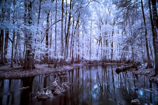 Cathedral by Michael Riffle. His infrared photographs shed new light on Tallahassee's wild surroundings.