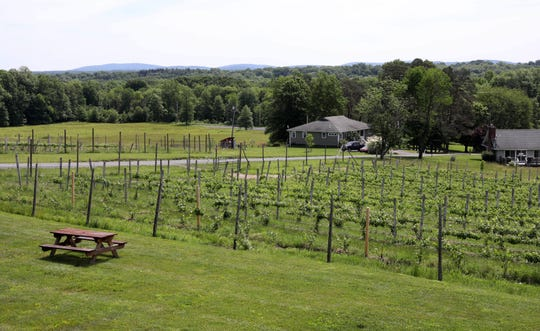The vineyards at the Robibero Family Vineyards in New Paltz, June 7, 2019.