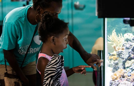 """We came last year and they loved the seine fishing.  Now, every time we go to the beach they are looking for sea creatures. I think it's important for my girls to learn about the things that humans do that harm the environment,"" said Fedna Eliassaint, of Fort Pierce, who shows her daughter, Brielle Janvier, 5, a fish that was blending in with its surroundings during the World Oceans Day celebration at the Smithsonian Marine Ecosystems Exhibit on Saturday, June 8, 2019, at the St. Lucie County Aquarium in Fort Pierce. The event started with a beach cleanup at Jetty Park from 8 to 10 a.m. and continued with kayak tours to Wesley Island, seining demonstrations, fish feeding and behind the scenes tours, aquarium mad libs, face painting, making reusable straws and other marine-related hands-on activities."